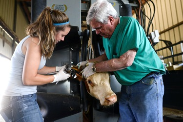 Dr. William Green (right) works with recent Louisiana Tech pre-vet graduate Hollie Hunter.
