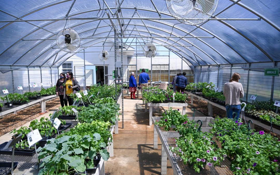 Tech Greenhouse back in bloom